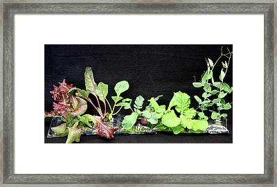 Astronaut Vegetable Production System Framed Print by Nasa