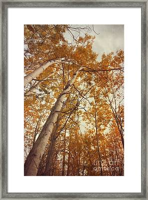 Autumn Aspens Framed Print by Priska Wettstein