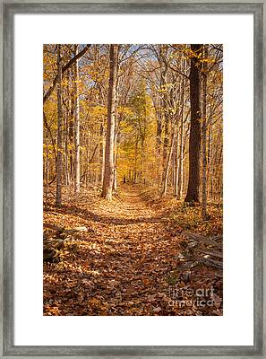 Autumn Trail Framed Print by Brian Jannsen