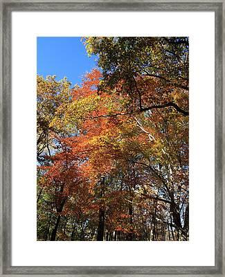 Autumn Trees Framed Print by Frank Romeo