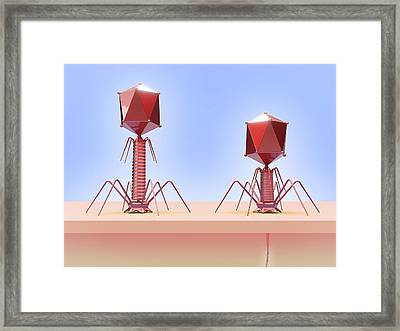 Bacteriophage Infecting E. Coli Bacterium Framed Print by Maurizio De Angelis