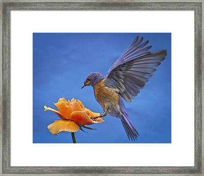 Balancing Act Framed Print by Jean Noren