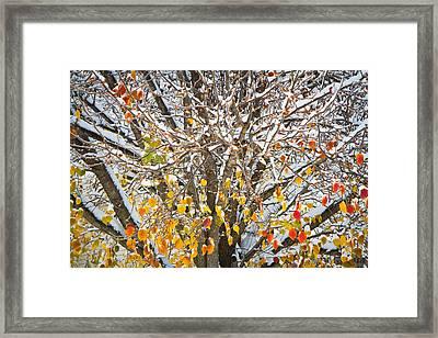 Battle Of The Seasons Framed Print by Annette Hugen