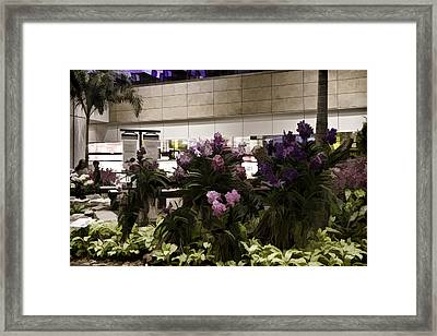 Beautiful Flowers Inside The Changi Airport In Singapore Framed Print by Ashish Agarwal
