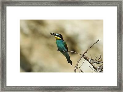 Bee-eathing Framed Print by Dragomir Felix-bogdan