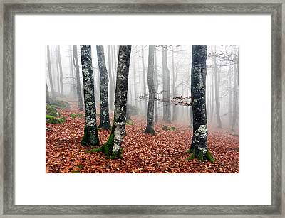 Beech Forest With Fog In Autumn Framed Print by Mikel Martinez de Osaba