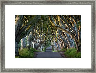 Beech Tree-lined Road Known As The Dark Framed Print by Brian Jannsen
