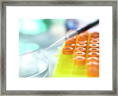 Biomedical Research Framed Print by Tek Image