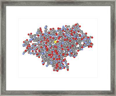 Birch Pollen Allergen Framed Print by Dr Mark J. Winter