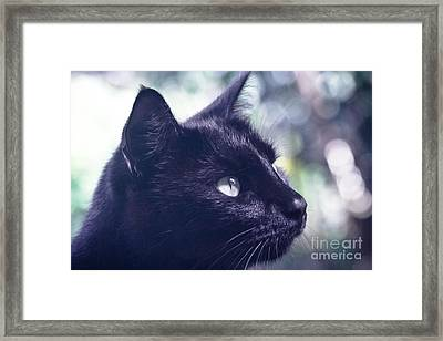 Boki Framed Print by Sharon Mau