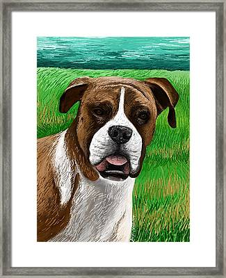 Boxer Framed Print by Heidi Creed