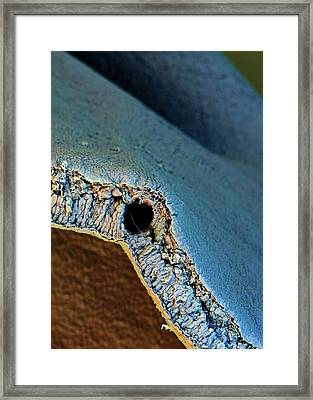 Broccoli Framed Print by Stefan Diller