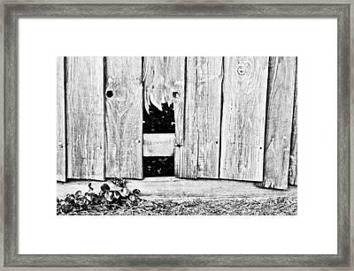 Broken Fence Framed Print by Tom Gowanlock