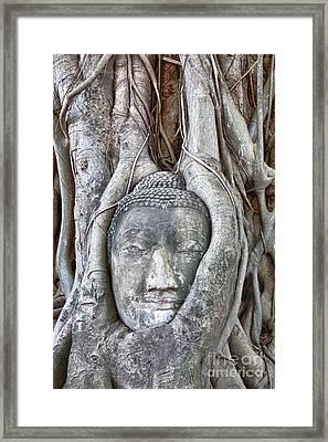 Buddha Head In Tree Framed Print by Fototrav Print