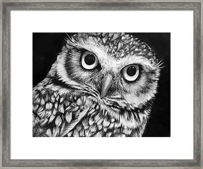Burrowing Owl  Framed Print by Sharlena Wood