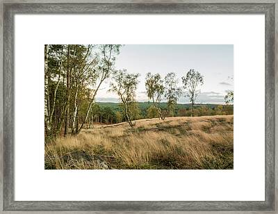 Cannock Chase Forest Framed Print by David Clarke