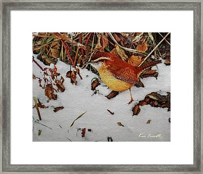 Carolina Wren Framed Print by Ken Everett