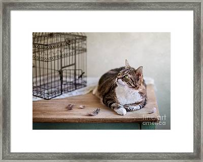 Cat And Bird Cage Framed Print by Nailia Schwarz