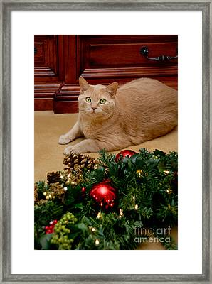 Cat And Christmas Wreath Framed Print by Amy Cicconi