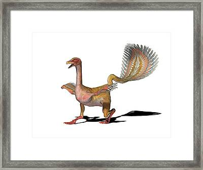 Caudipteryx Dinosaur Framed Print by Friedrich Saurer