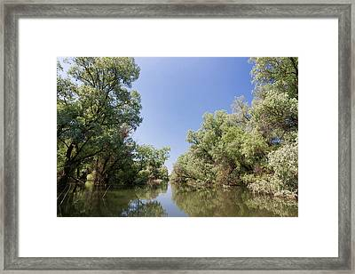Channels And Lakes In The Danube Delta Framed Print by Martin Zwick