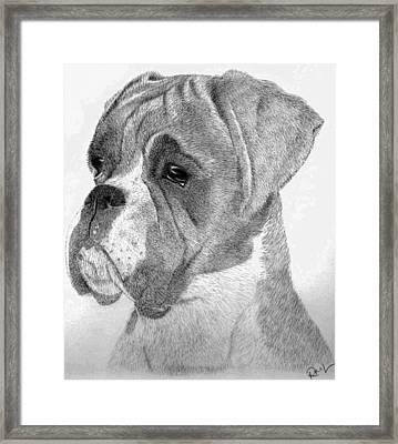 Charlie Framed Print by Rosanna Maria