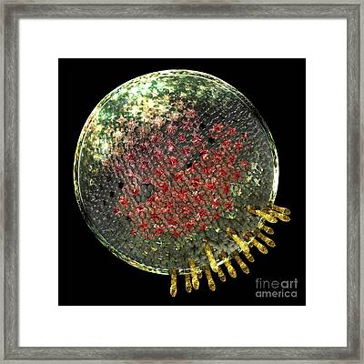 Chlamydia Elementary Body, Artwork Framed Print by Russell Kightley