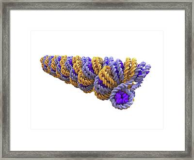 Chromatin Fiber And Dna Packaging Framed Print by Alfred Pasieka