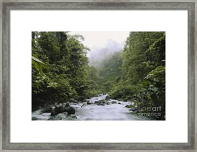 Cloud Forest, Costa Rica Framed Print by Gregory G. Dimijian, M.D.
