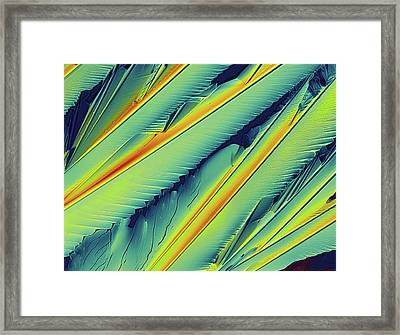 Coenzyme Q10 Crystals - Polarized Lm Framed Print by Alfred Pasieka