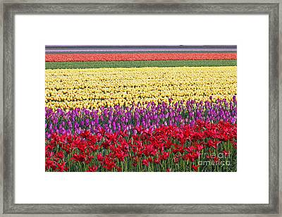 Colors Of Holland Framed Print by Lars Ruecker