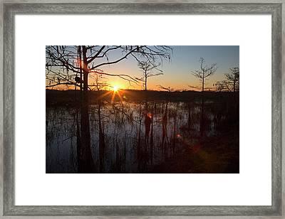 Cypress Swamp At Sunrise Framed Print by Jim West