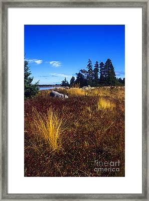 Deer Isle Maine Framed Print by Thomas R Fletcher