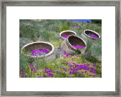 Desert Flowers Framed Print by Joan Carroll