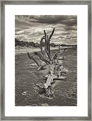Desolate Framed Print by Marcia Colelli