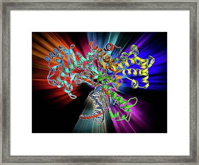Dna Polymerase Klenow Fragment Framed Print by Laguna Design