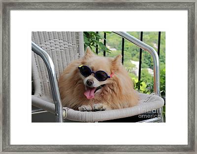 Lazy Dog Framed Print by Charline Xia