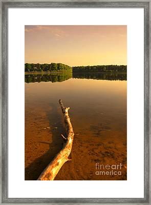 Drift Wood Framed Print by Svetlana Sewell