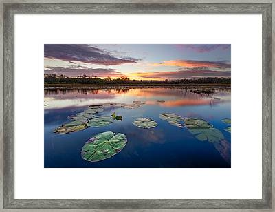 Everglades At Sunset Framed Print by Debra and Dave Vanderlaan