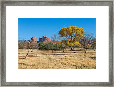 Fall Field On Cathedral Rock Framed Print by Scott Campbell