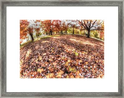 Fall Foliage Framed Print by Mark Ayzenberg