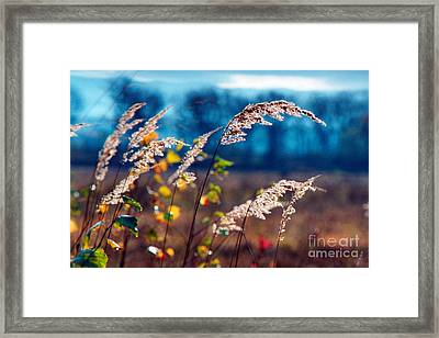 Fall Framed Print by James Taylor