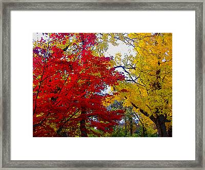 Fall Leaves Framed Print by Ariane Moshayedi
