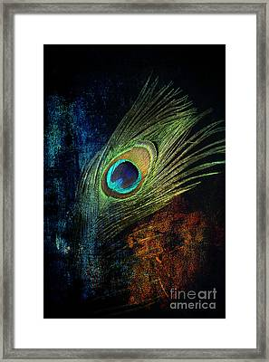 Feathers Framed Print by Mark Ashkenazi