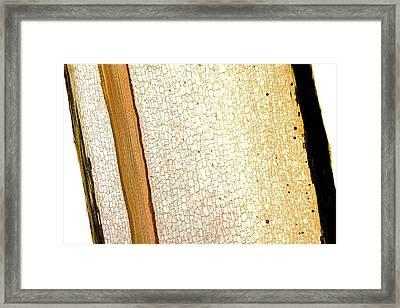Fern (pteridium Aquilium) Rhizome Framed Print by Dr Keith Wheeler
