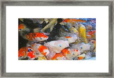 Fish Framed Print by Tonyah Nichols