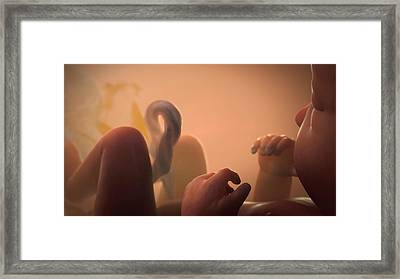 Foetus In The Womb Framed Print by Thierry Berrod, Mona Lisa Production
