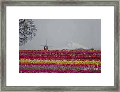 For The Beauty Of The Earth Framed Print by Nick  Boren