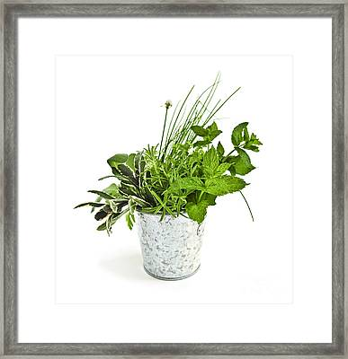 Fresh Herbs Framed Print by Elena Elisseeva