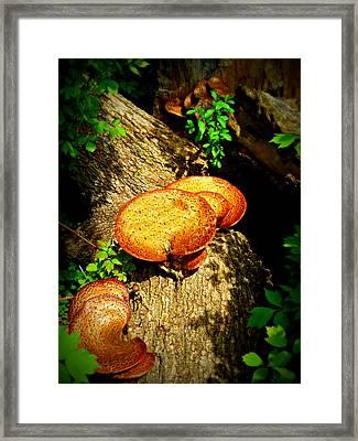 Fung I Framed Print by Cyryn Fyrcyd